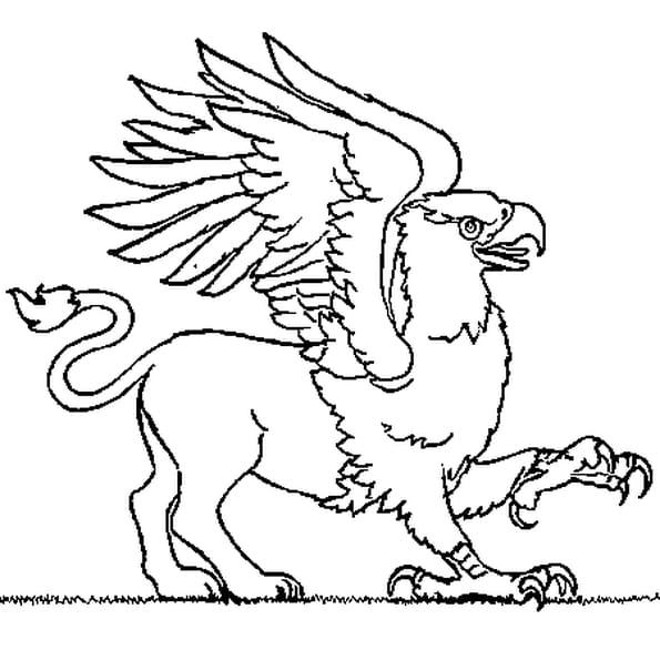 Coloriage Griffon en Ligne Gratuit à imprimer