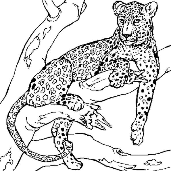 Coloriage Léopard couché sur une branche d'arbre en Ligne Gratuit à imprimer
