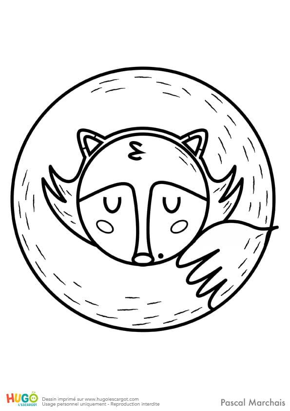 Animaux du monde, le petit renard
