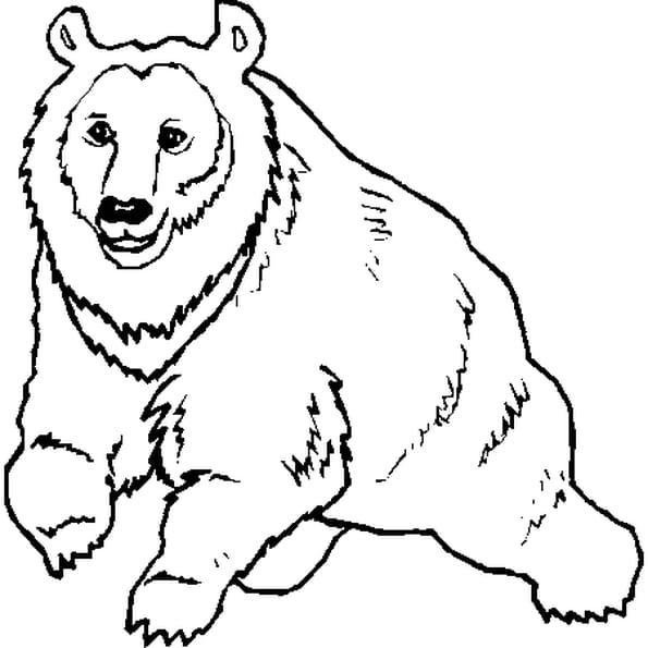 Coloriage ours en Ligne Gratuit à imprimer