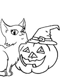 Citrouille d'Halloween et chatte