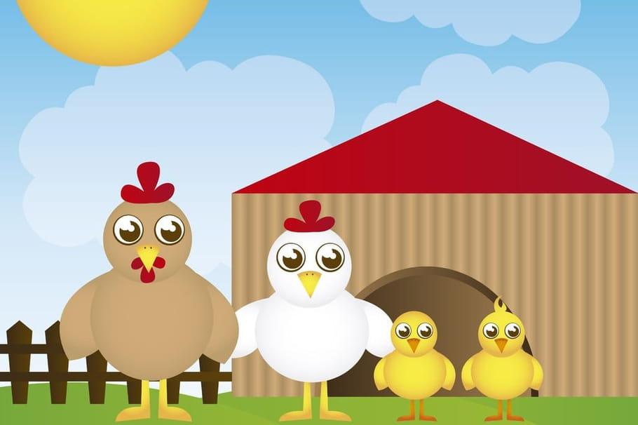 Le Petit Poussin Chansons Pour Enfants Sur Hugolescargot Com