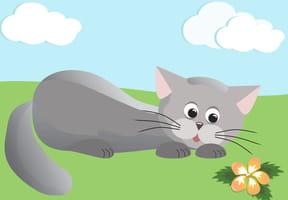 Il est gris le gros chat