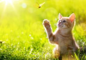 Miaou! Miaou!