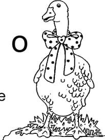 lettre O comme oie