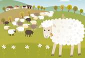 Mon père avait cinq cents moutons