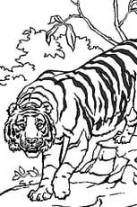 Coloriage Tigre En Ligne Gratuit A Imprimer