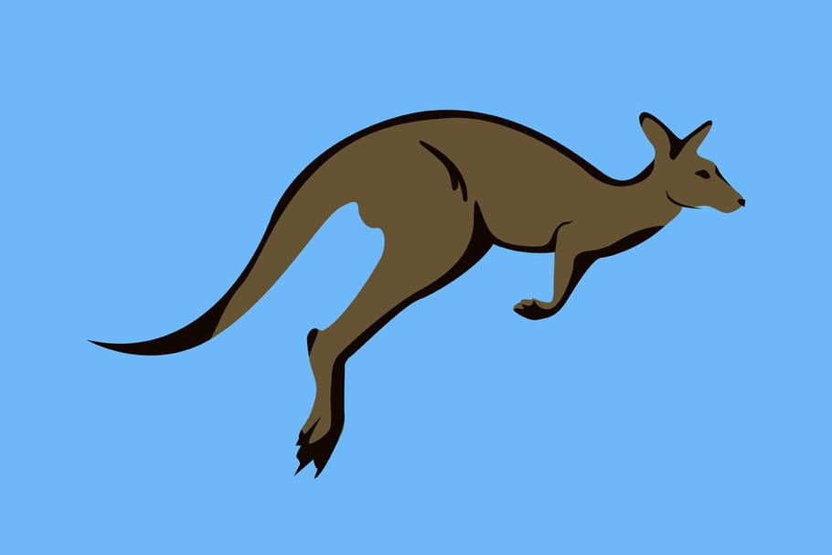 Comptine Le kangourou
