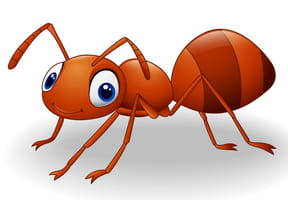 Une fourmi de dix-huit mètres