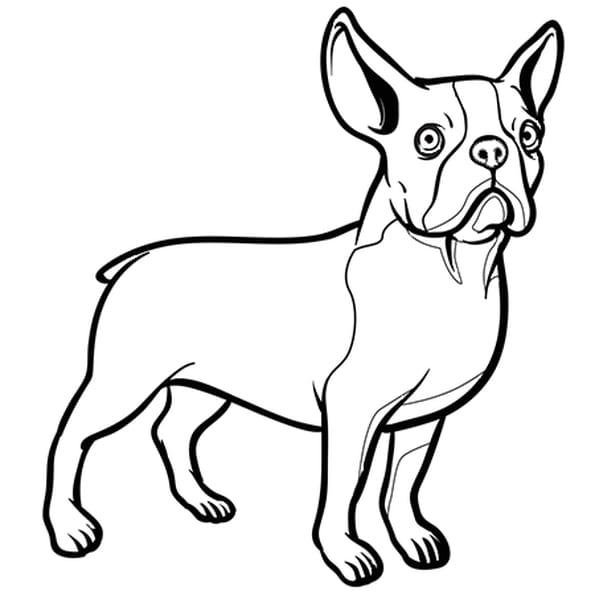 chien bouledogue nain coloriage