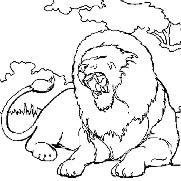 Dessin lion a colorier