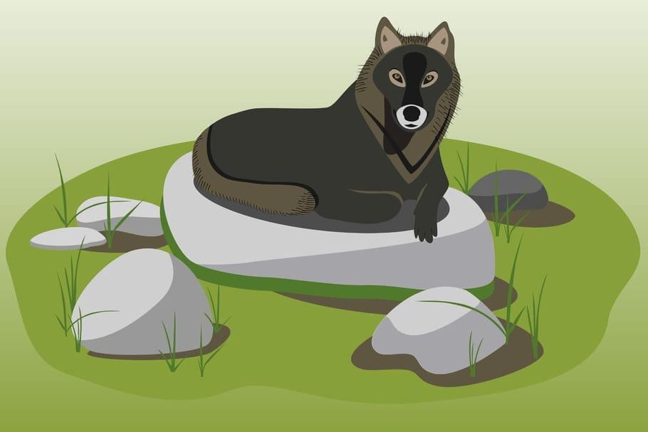 Comptine Le grand loup du bois