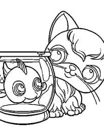pet shop poisson