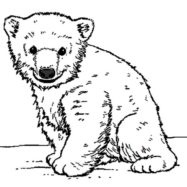 Ourson coloriage ourson en ligne gratuit a imprimer sur coloriage tv - Comment dessiner un ours ...