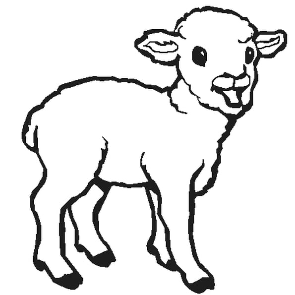 Dessin agneau a colorier