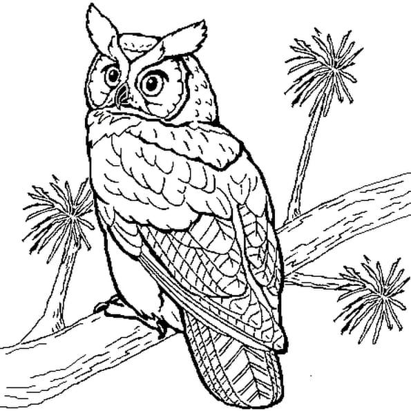 Hibou coloriage hibou en ligne gratuit a imprimer sur - Hibou en dessin ...