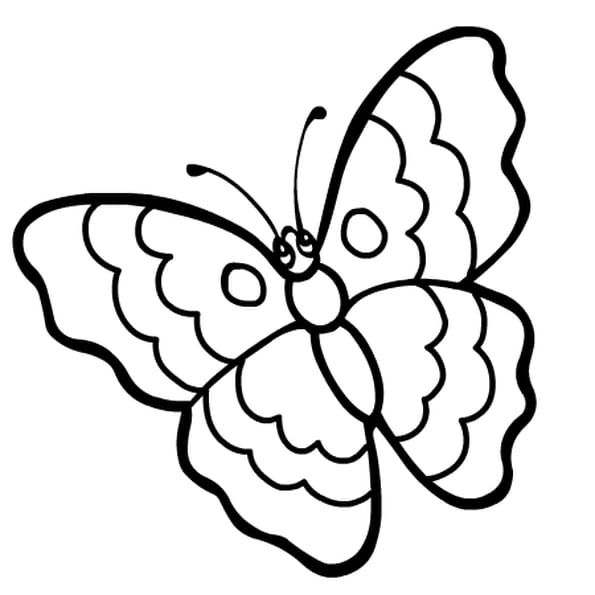 dessin papillon rigolo a colorier
