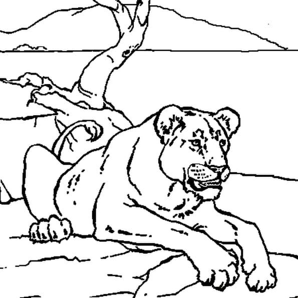 Coloriage Lionne au repos en Ligne Gratuit à imprimer
