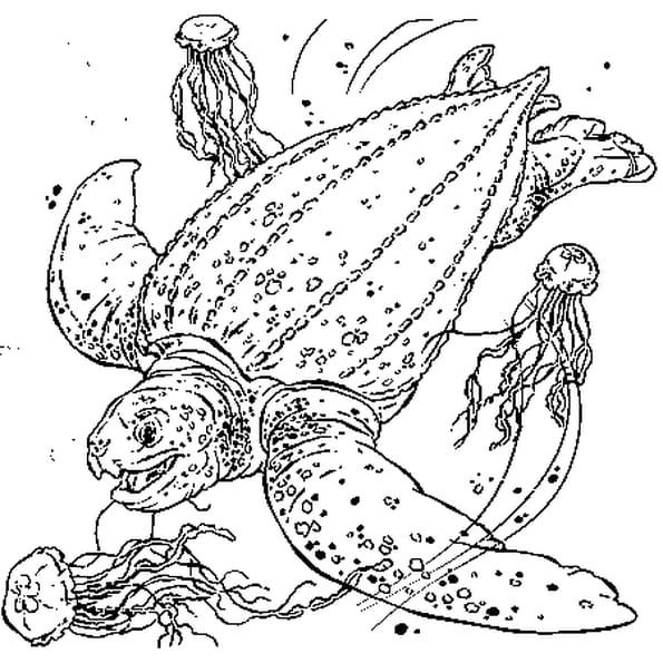 Coloriage Tortue de Mer en Ligne Gratuit à imprimer