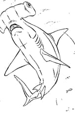Coloriage Requin marteau