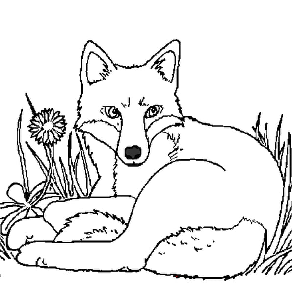 Dessin renard a colorier