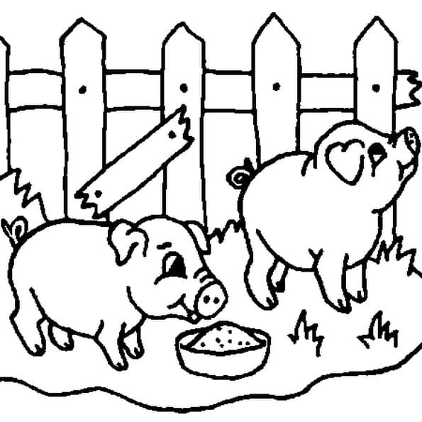Coloriage bébés cochons en Ligne Gratuit à imprimer