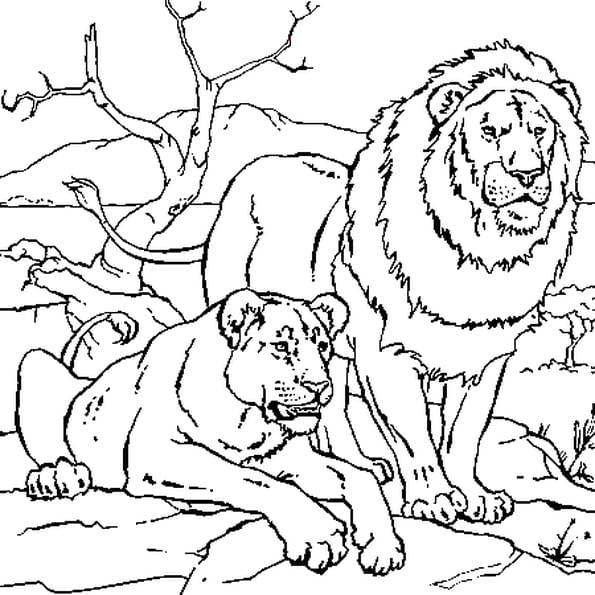 Coloriage Lion Et Lionne Repos En Ligne Gratuit A Imprimer
