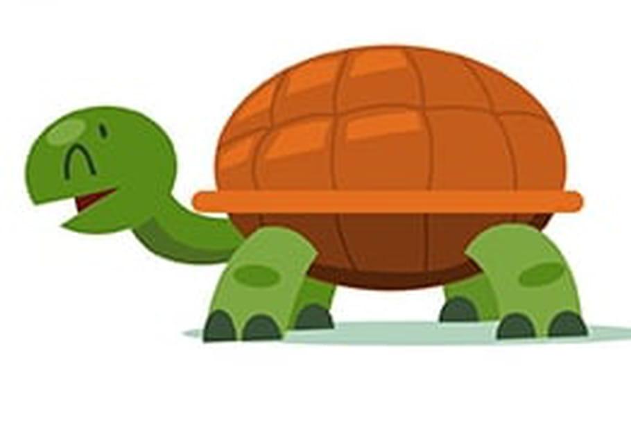 Dessiner une tortue - Tortue en dessin ...