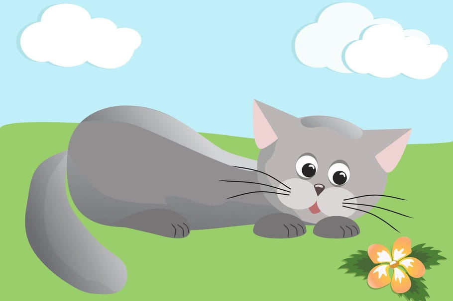 Comptine Il est gris le gros chat