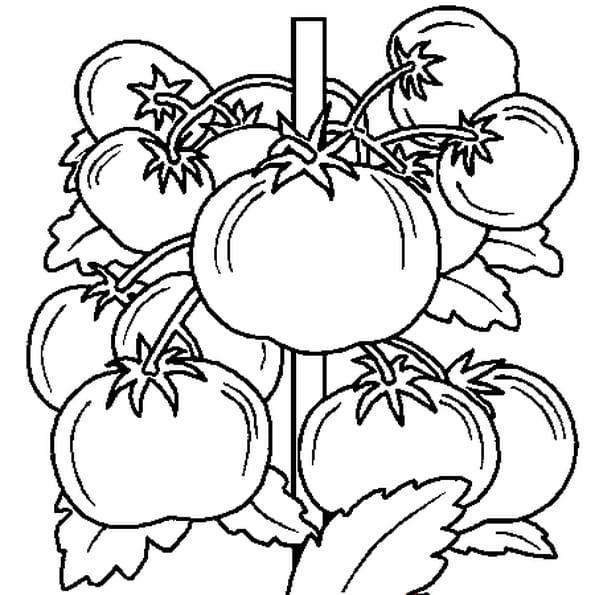 Coloriage Légumes du jardin en Ligne Gratuit à imprimer