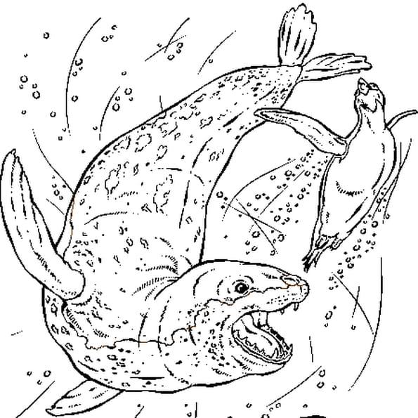 Coloriage Léopard de mer en Ligne Gratuit à imprimer