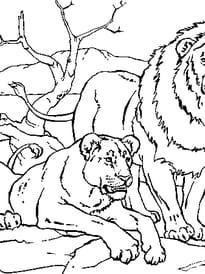 Lion et lionne repos