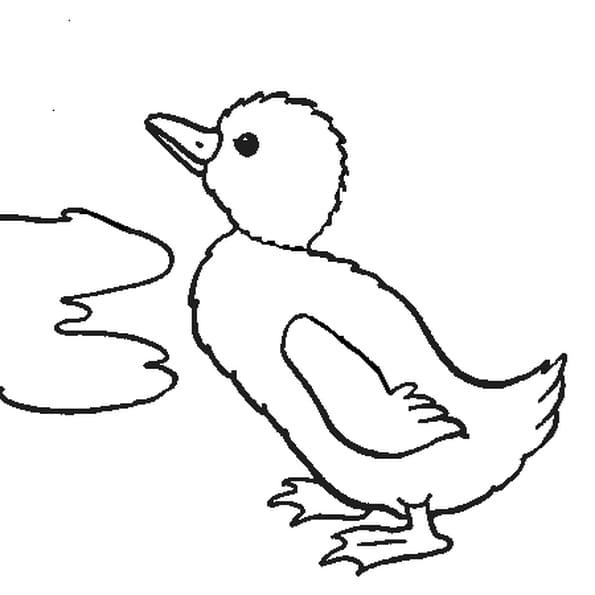 Caneton coloriage caneton en ligne gratuit a imprimer - Canard a colorier ...