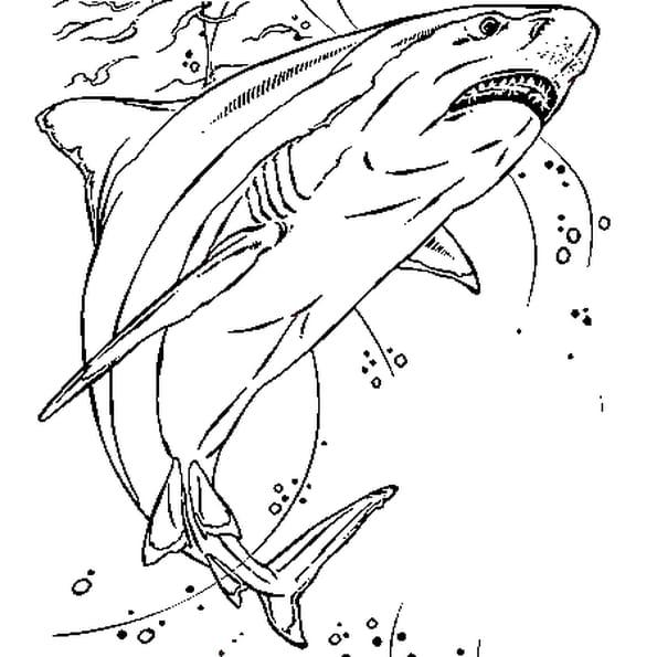 Dessin Requin a colorier