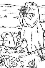 Coloriage Marmottes En Ligne Gratuit à Imprimer