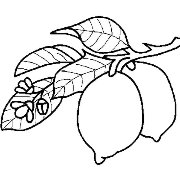 Coloriage Citron en Ligne Gratuit à imprimer