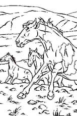 Coloriage Cheval sauvage en Ligne Gratuit à imprimer