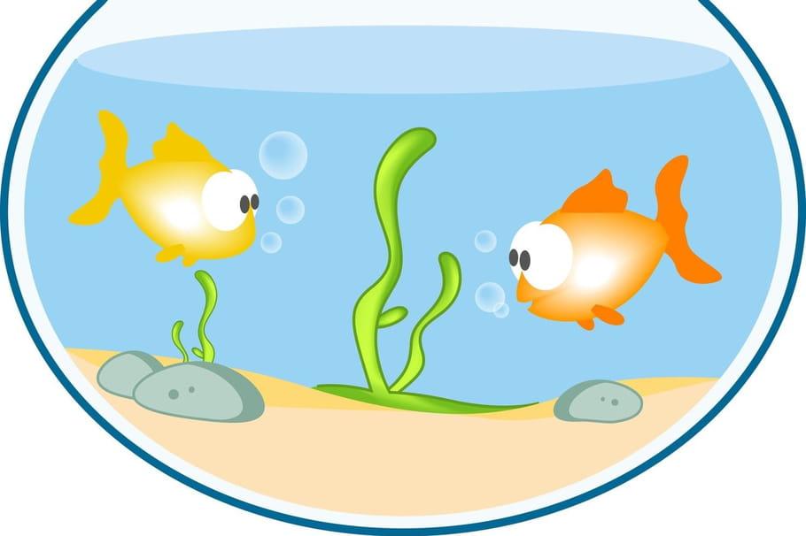 Comptine Petit poisson qui tourne en rond