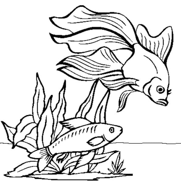 Coloriage de poisson rouge colorier - Dessin de poisson rouge ...