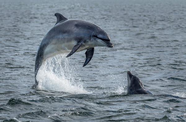 les-cris-des-animaux-marins