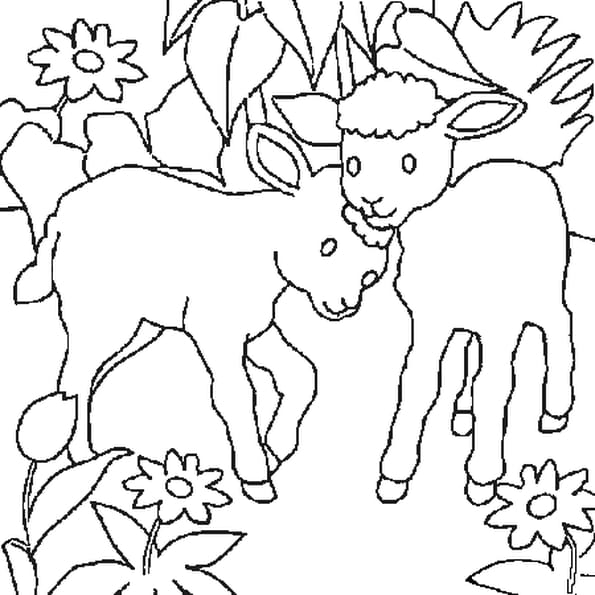 Dessin agneaux a colorier