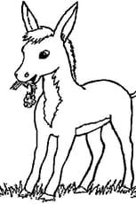Coloriage petit cheval