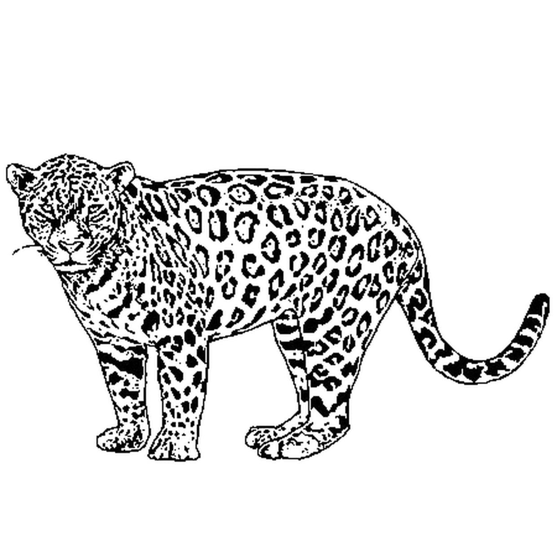 Coloriage Jaguar En Ligne Gratuit A Imprimer