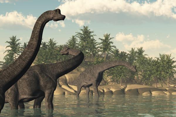 brachiosaure-dinosaures