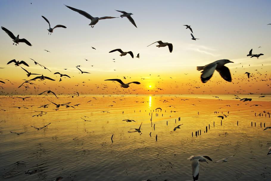 Quiz sur les animaux marins, oiseaux et insectes