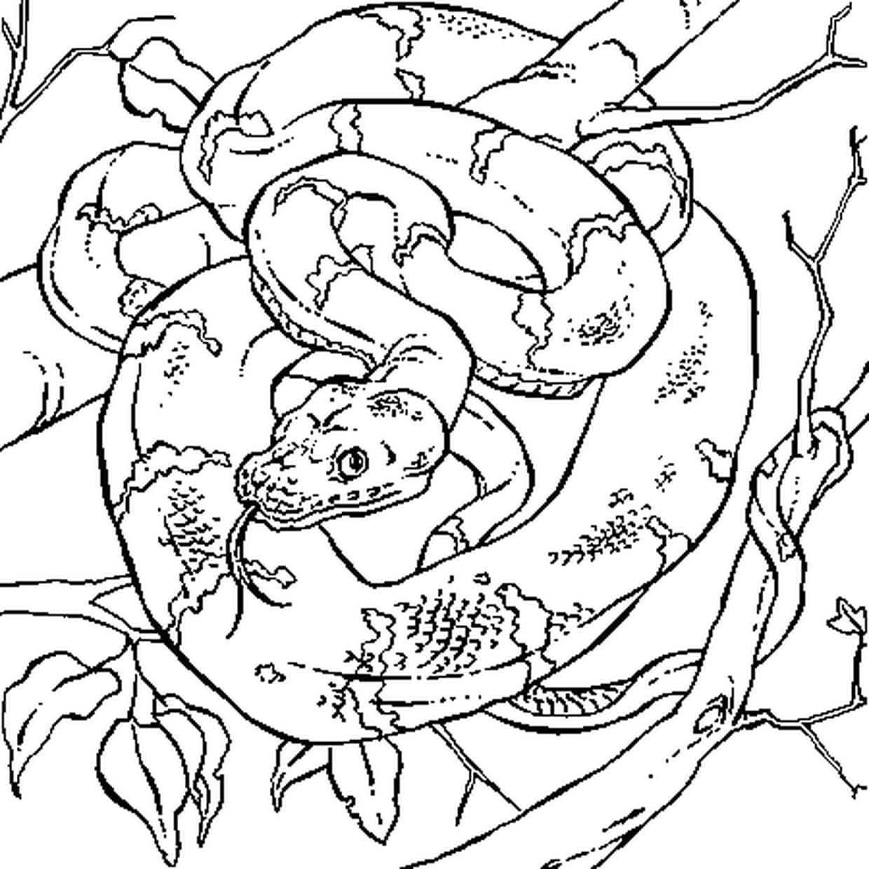 Coloriage Boa Dans La Jungle En Ligne Gratuit A Imprimer