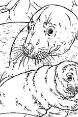 Coloriage Bébé phoque en Ligne Gratuit à imprimer