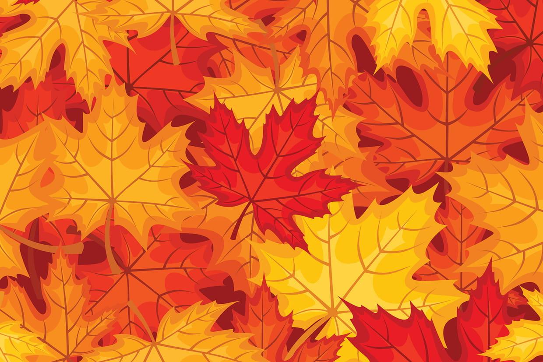 Coloriage feuilles d 39 automne sur for Mon amaryllis ne fait que des feuilles