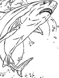 Coloriage requin page 2 - Requin rigolo ...