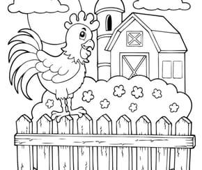 La grange et le coq de la ferme